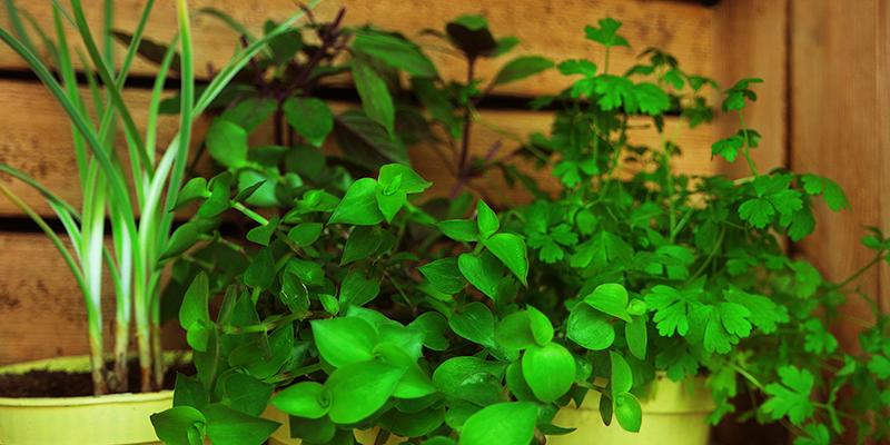NEU: Unsere BIO-Futterpflanzen